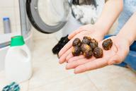 Stiftung Warentest: Hände weg von Waschnüssen und -kastanien